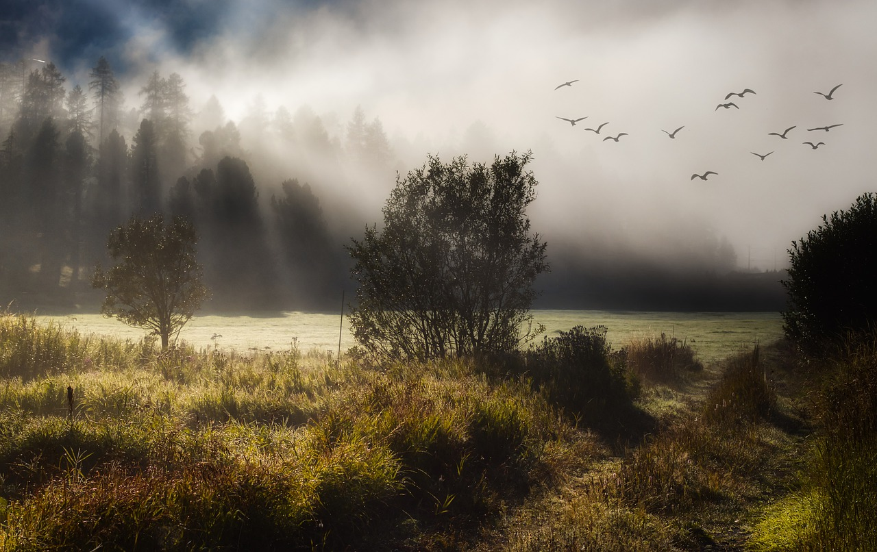 Birds are like poems against the sky, surreal mist surrounds trees